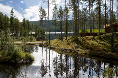 Experience Lofsdalen - Where nature is in harmony