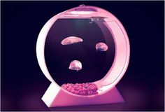 Jellyfish Tank