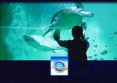 Aquarium Saint Malo : Atypique, entre parcours ludique multicolore, pluralité des espèces et diversité des milieux, l'aquarium de Saint-Malo est le divertissement familial par excellence. Par beau ou mauvais temps, on apprend tout en s'amusant. Venez découvrir le fond de toutes les mers et ses habitants, connus ou méconnus ! Billets à tarifs préférentiels en vente à l'office de tourisme de Saint Cast le Guildo