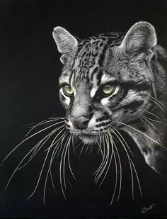 Scratchboard by Lesley Barrett Animal Paintings, Animal Drawings, Art Drawings, Black Paper Drawing, Animals Black And White, Colored Pencil Artwork, Scratchboard Art, Scratch Art, Wildlife Art