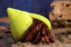 3D printed shell for a hermit crab - there's a shortage of real shells for these little chaps. Love these Ikea homes for homeless hermit crabs.
