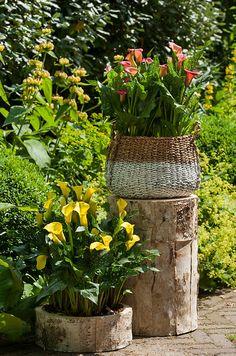 Kleur in de tuin is niet zonder reden Omring je met de fijnste kleurcombinaties van zomerbollen op pot Onbewust worden we beïnvloed door de kleuren om ons heen. Om ons prettig te voelen proberen we een combinatie van 'warme' en 'koele' kleuren om ons heen te verzamelen. Maar hoe doe je dat buiten? De oplossing is nabij: creëer de fijnste kleurencombinaties in jouw tuin met lelies en calla's op pot.