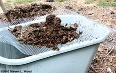 Good article about composting.  And a recipe for compost starter.  12 ounce Coke (regular, not diet), one cup of household ammonia, and a quarter cup of dish detergent. Mix about a cup of that mixture into a two gallon watering can and sprinkle it on the pile.