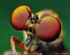 macro photo insect