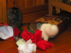 Kitty Trapping by BlueRidgeKitties, via Flickr