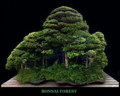 "Bonsai Forest --- Inspiration Living Board Game - Make ""Landmasses"" based on different Bioregions on Earth?"
