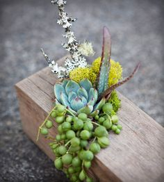 Wooden Beam Planter - intersperse with holes drilled for tea lights and create minimal centerpiece/runner on a long table or buffet. Planter Table, Diy Planters, Wooden Beam, Love Garden, Edible Garden, Cactus, Tropical Flowers, Container Gardening, Indoor Plants