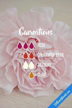 Diffuser Blends - Rose, Cinnamon Bark, Jasmine, Clove