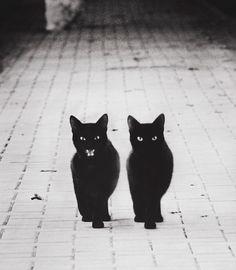 Wat spoken katten allemaal uit? Wat denken ze? Wat doen ze als je van huis weg bent? Wat vinden ze van je nieuwe kapsel? Hebben ze vrienden? Allerlei dingen die we nooit precies kunnen weten. Dat is helemaal niet erg, maar het zorgt wel dat de dieren soms één groot mysterie zijn voor mensen. Dat …