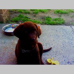 MY DREAM PUPPY!! Ahh! :D