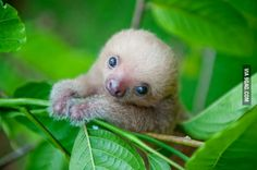 I can't be the only one here who thinks sloths are one of the cutest animals ever, right? - 9GAG