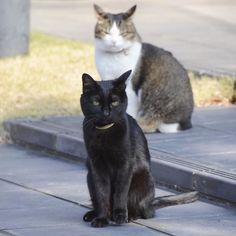 三花ーうしろうしろーー のま妖気を感じて妖怪アンテナ立ってるねw . #cat #neko... Follow us on Instagram :D #cats #cat #catlover #lovecats #funny #fun #cute #socute #feline #felines #felinefriend #fur #furry #paw #paws #kitten #kitty #kittens #kittycat #kittylove #fluffy #fluff