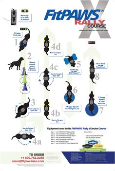 FitPAWS® Infographic Posters |