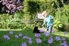 My son playing with our cat. Lindas trädgårdsblogg
