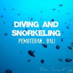 diving pemuteran
