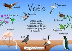 Home School: Grade R - Week 18 - Happy Doo-Da - Afrikaans - Birds - Voëls Preschool Themes, Preschool Classroom, Preschool Learning, Classroom Activities, Teaching, Afrikaans Language, School Posters, Science Biology, School Resources