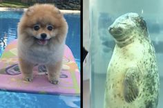 9 Animal Videos From The Past Week You Won't Want To Miss