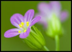 Photography favs: Wild flowers