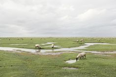 """From photographer Akos Major's """"Still"""" series, shot at various locations in France, Austria, and Hungary"""