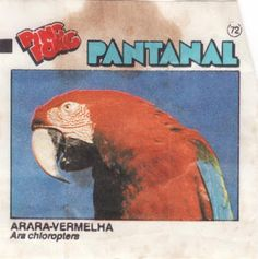 Chicle de Bola Ping Pong Pantanal | Blog do Gilmar Quotes For Kids, High Quality Images, Free Images, Wallpaper, Painting, Art, Pantanal, 80s Candy, 90s Childhood
