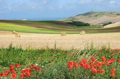 Le Cap Blanc Nez, vu des champs d'Escalles (Pas de Calais, Pays du Calaisis)