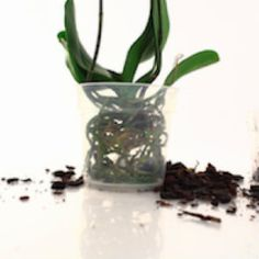 orchid_repotting-1