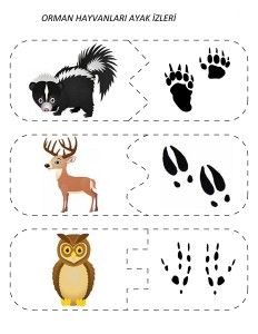 Animal Activities, Montessori Activities, Activities For Kids, Kindergarten Projects, In Kindergarten, Forest Animals, Woodland Animals, La Petite Taupe, Animal Footprints