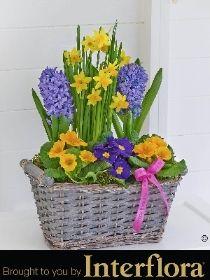 Happy Birthday Classic Spring Planter