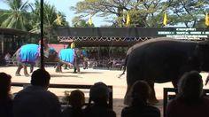 nice  #asia #Bangkok #Basketball #elephant #elephants #incredible #live #playing #real #soccer #thailand Real Elephants Playing Basketball Live! http://www.pagesoccer.com/real-elephants-playing-basketball-live/