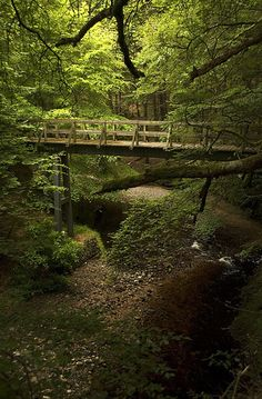 footbridge in the woods