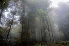 The first fogs of autumn - Le prime nebbie di autunno. - The beechwood come the…