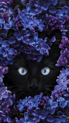 iphone wallpaper cat Get Best Wallpaper for iPhone / Plus Today Iphone Wallpaper Cat, Cute Cat Wallpaper, Best Iphone Wallpapers, Animal Wallpaper, Cute Wallpapers, Wallpaper Wallpapers, Beautiful Cats, Animals Beautiful, Cat Flowers