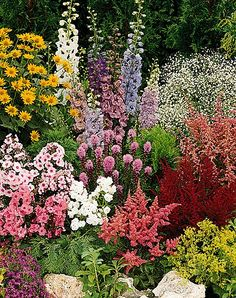 perennial garden - varying heights