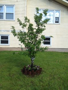 2014 Tree is really filling out this year. Happy it's growing so well.