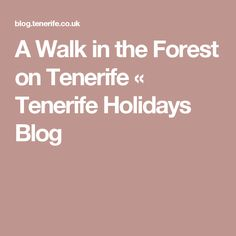 A Walk in the Forest on Tenerife «  Tenerife Holidays Blog