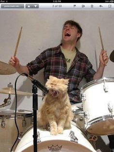 Rock on I call this song a cats a mans best friend followed by cats rule the world