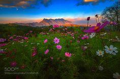 _/\_ - Pinned by Mak Khalaf sunset @ Doi Maetaman u will see Doi Luang Chiang Dao. Landscapes blueskychiangdaochiangmaidoieveningflowersmaetamanmountainsunsetthailand by jaysjays