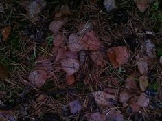 Day 79 - Autumn leaves