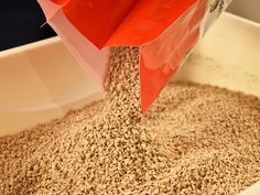 Fantastic Totally Free types of cat litter Thoughts There are numerous alternatives for kitty and also have the strengths as well as disadvantages.