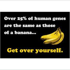 Banana Human 2x3 Magnet