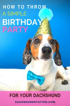 How Do You Plan a Birthday Party For A Puppy?  Celebrate Your Dachshund's Birthday include a puppy photo session, puppy birthday gifts, yummy pupcakes, and some puppy dog games.  #dachshund  |dachshund birthday party| Dog Birthday Gift, Puppy Birthday Parties, Puppy Party, Birthday Fun, Birthday Ideas, Dachshund Puppies, Dachshunds, Dog Games, Pet Dogs