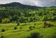 Planina Tara - Nacionalni park