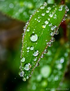 tiny-water-droplets-on-small-leaf.jpg (1484×1920)