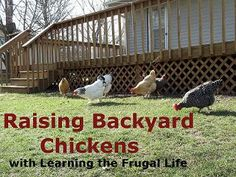 Learning The Frugal Life: Chickens