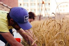 These young farmers are growing something different on their urban rooftops.