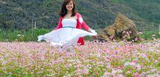 Vẻ đẹp mùa hoa Tam giác mạch ở Hà Giang - PYS Travel
