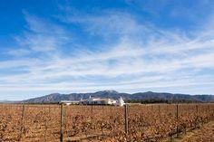 Vinos mexicanos y vinicolas de Mexico: Visitar la zona vinicola de Zacatecas