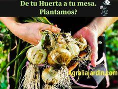 Compra las semillas o planteles en Agralia del Principado y disfruta de tu Huerta. #huerta #agralia #agraliajardin.com #asturias Plantar, Vegetables, Garden Centre, Vegetable Garden, Vegetable Recipes, Veggies