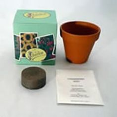 Terracotta Pot Grow Kit - Daisy by WWP Resources. $3.99. Everything you need to grow your own garden on the window sill or counter top! Just follow the instructions included in the kit, you don't have to be an expert anyone can become a gardener. Our grow kits make a great gift for everyone from those new to gardening to the experienced and passionate gardener. These plants are easy to grow and there is no dirt, just a peat pellet. Plants add depth and the beauty...