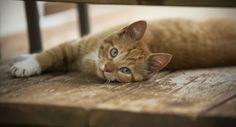 | daff_deck cat